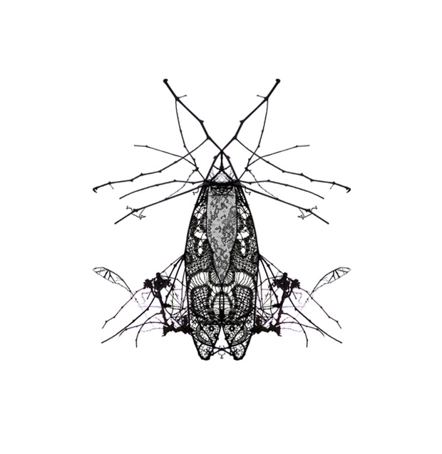 Ana Gómez Bernaus, Winter Bugs