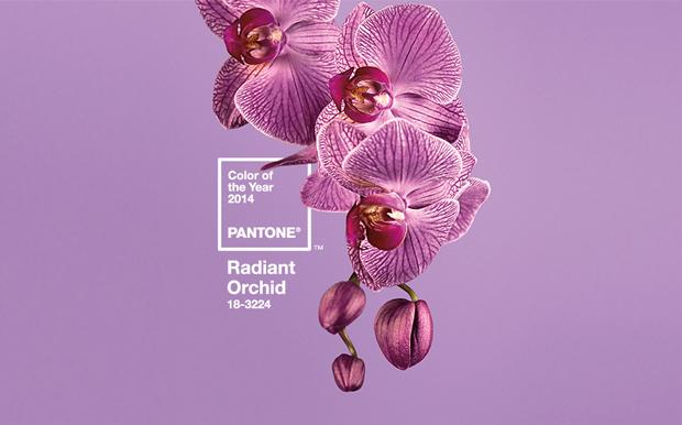 Color del Año 2014: PANTONE Orquídea Radiante 18-3224