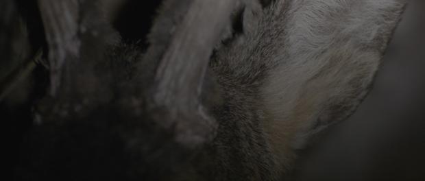Dvein,  frame del corto We Wander