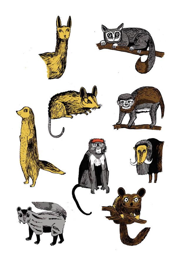 Ilustarción de animales