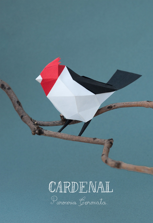 Guardabosques – Cardenal