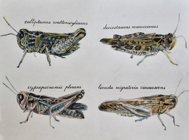 Mencion Especial –  Premios de Ilustración Científica 'Il·lustraciència'