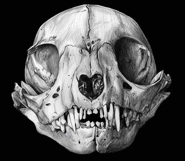 David Pérez – Mención Especial – skull