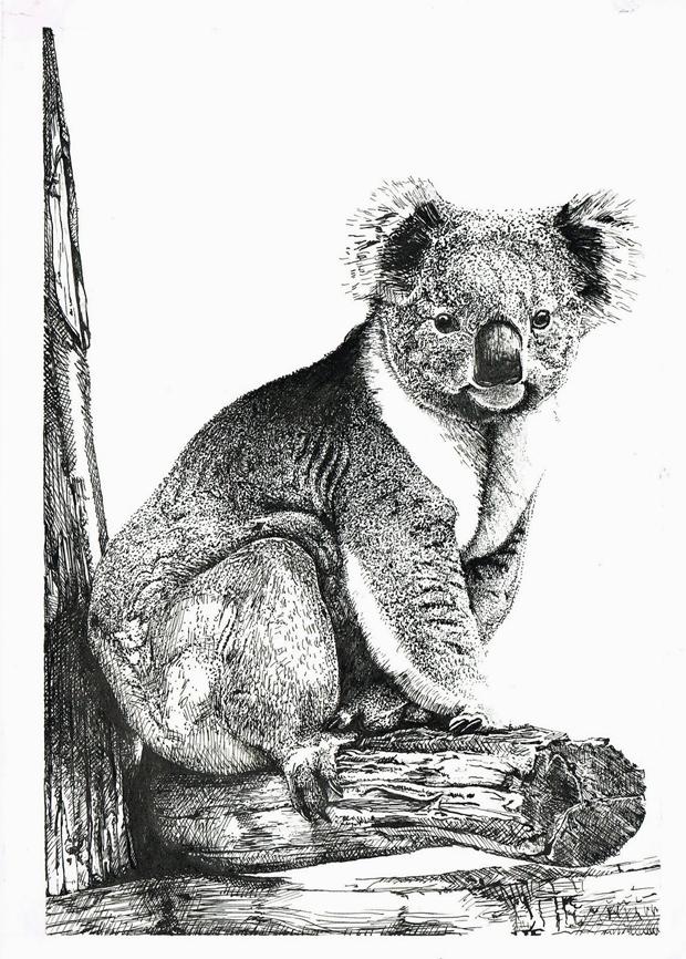 Oto Vega – Koala Bear
