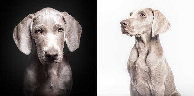 retratista animal – fotografía de mascotas