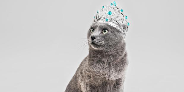 fotografía de mascotas – gato con corona y complementos