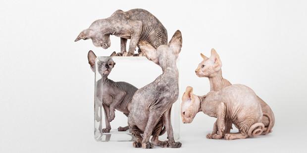 SantosRoman – fotografía de mascotas
