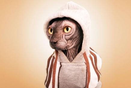 Santos Román y la fotografía de mascotas con mucho sex-appeal
