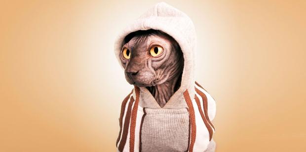Santos Román – sphynx gato ropa sudadera