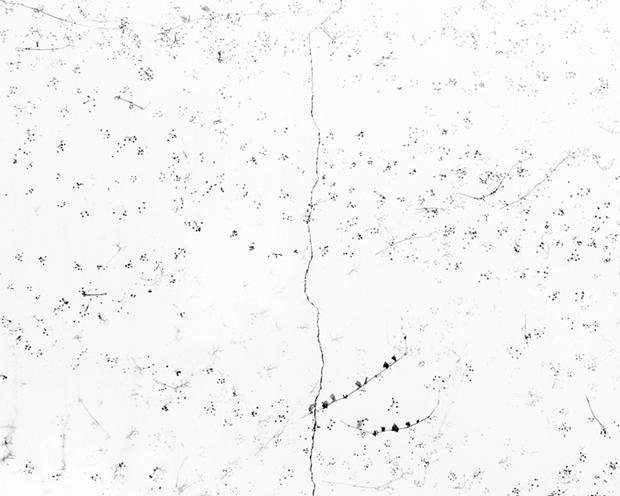 Bohnchang Koo – fotografías – Blanco sobre blanco.