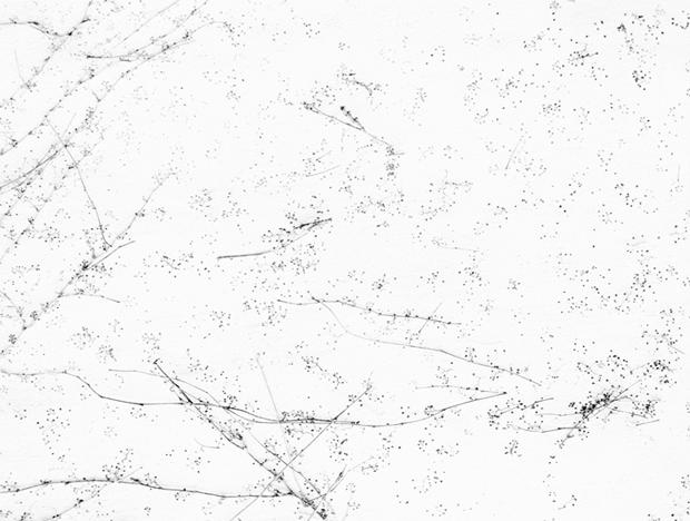 Blanco sobre blanco. Fotografías de Bohnchang Koo