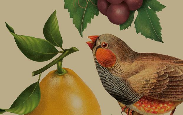 Pure Drops, branding & packaging design Bob Studio