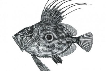 Premios de Ilustración Científica Il·lustraciència, 3ª edición