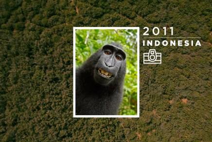 Animal Copyrights, el primer banco de imágenes cuya autoría corresponde a diferentes especies