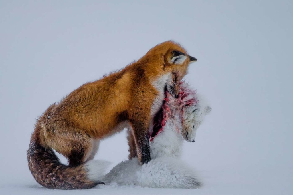 Wildlife Photographer of the Year 2015.