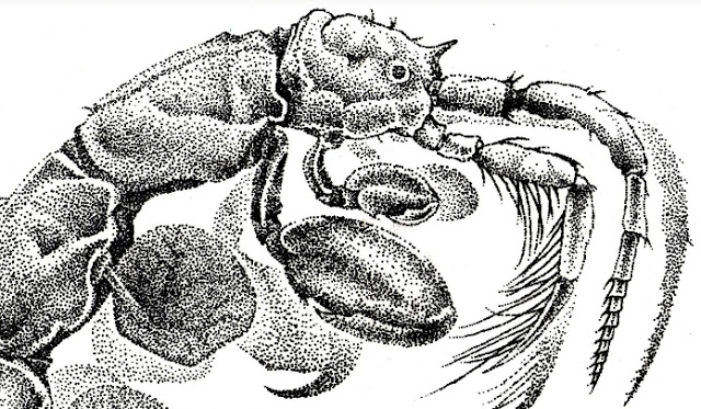 Il·lustraciència, los premios de ilustración científica, anuncia su 4ª edición