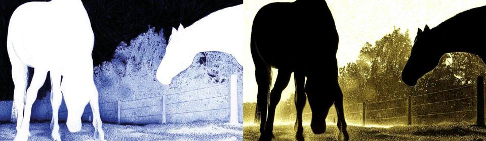 Inverted Drawings, sorprendentes ilustraciones naturistas con boli Bic