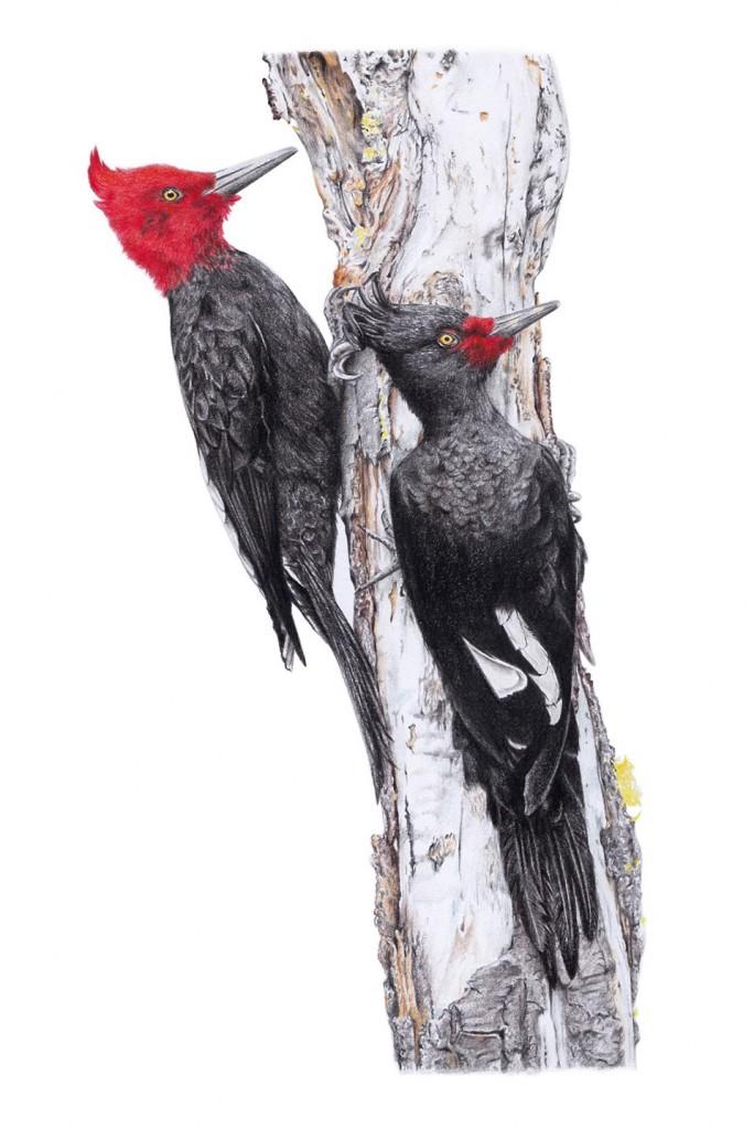 obras premiadas en Il·lustraciencia 2016