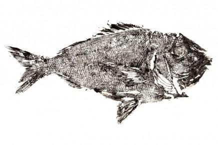 ¿Qué es el Gyotaku y por qué sirve para diseñar branding?