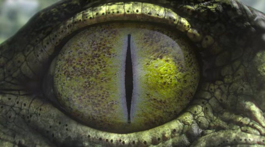 el tráiler de los Juegos Olímpicos de Río de la BBC - ojo cocodrilo