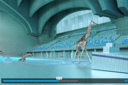 '5 mètres 80', donde las jirafas practican el salto de trampolín