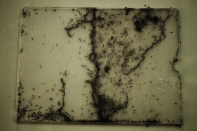 Cuentos amazónicos por Rafael Milani - 11