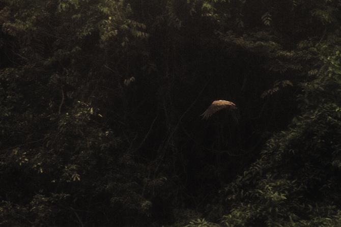 Cuentos amazónicos por Rafael Milani - 4