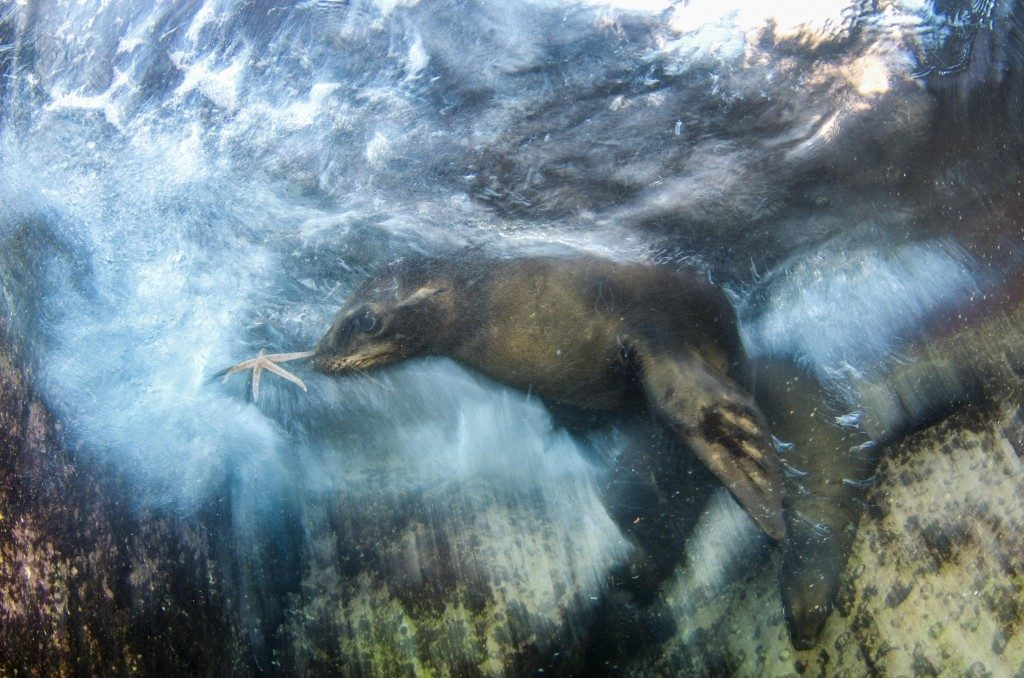 Luis Javier Sandoval, Wildlife Photographer of the Year 2016