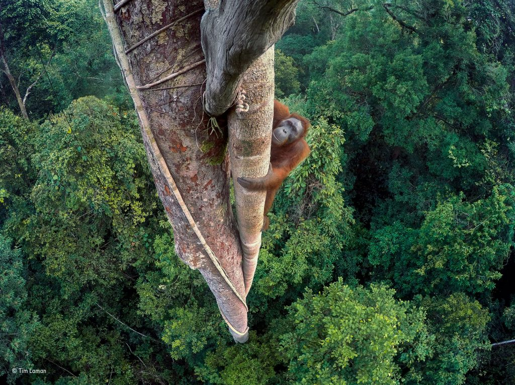 Ganador absoluto del Wildlife Photographer of the Year 2016