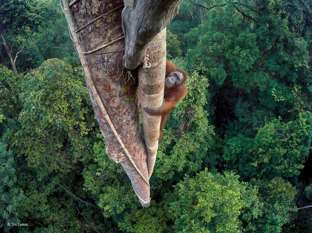 Ganador absoluto del Wildlife Photographer of the Year 2016