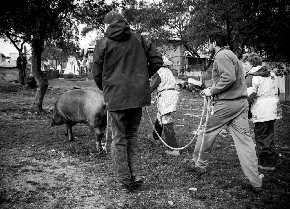 'A todo San Martín le llega su cerdo', Premios LUX 2016 de Rafa Fierres