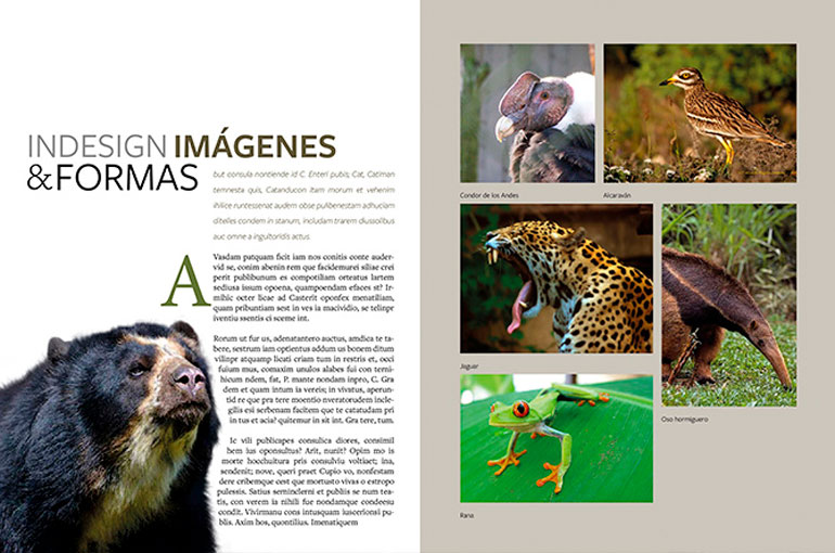 Aprende Diseño Editorial y maneja Adobe InDesign como un experto