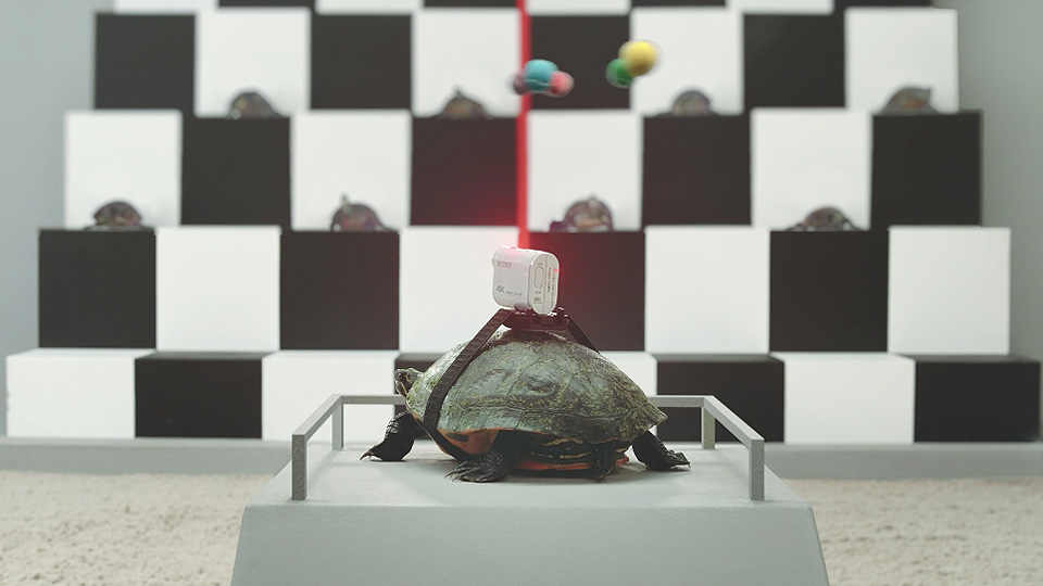Turtle Cam en la salida de la carrera 5