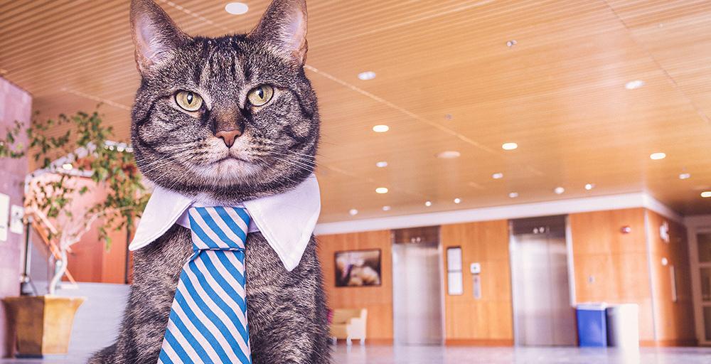 finde gato corbata 001