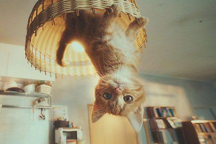 El gato que logró domar la gravedad: así es el anuncio 'Gravity Cat'