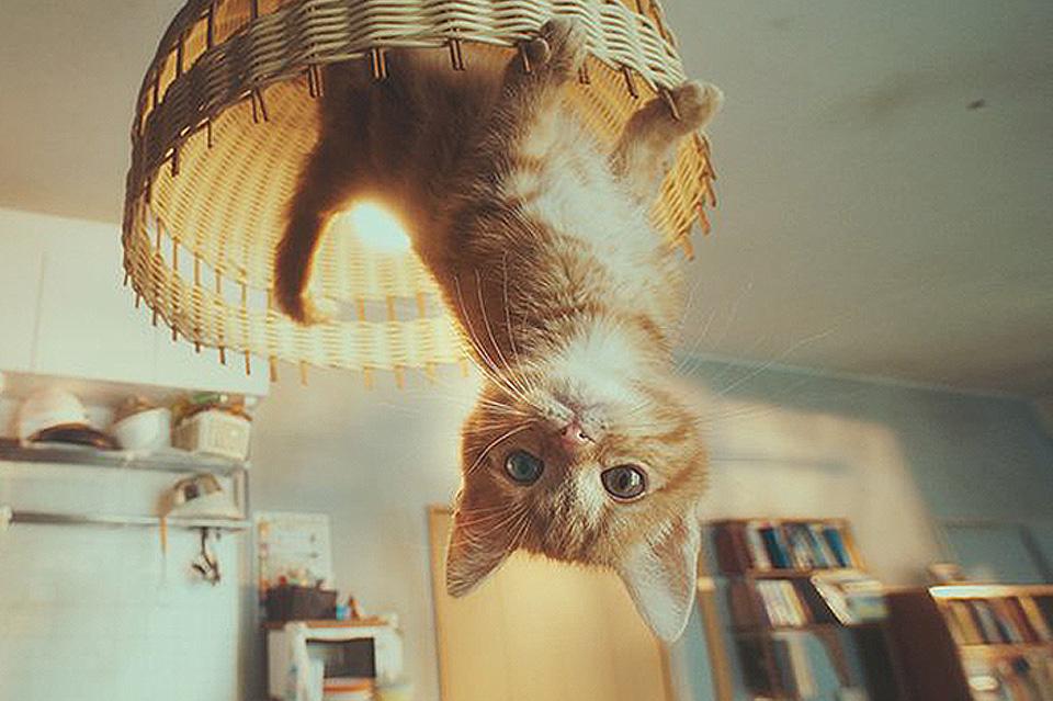 Gato Spot nueva