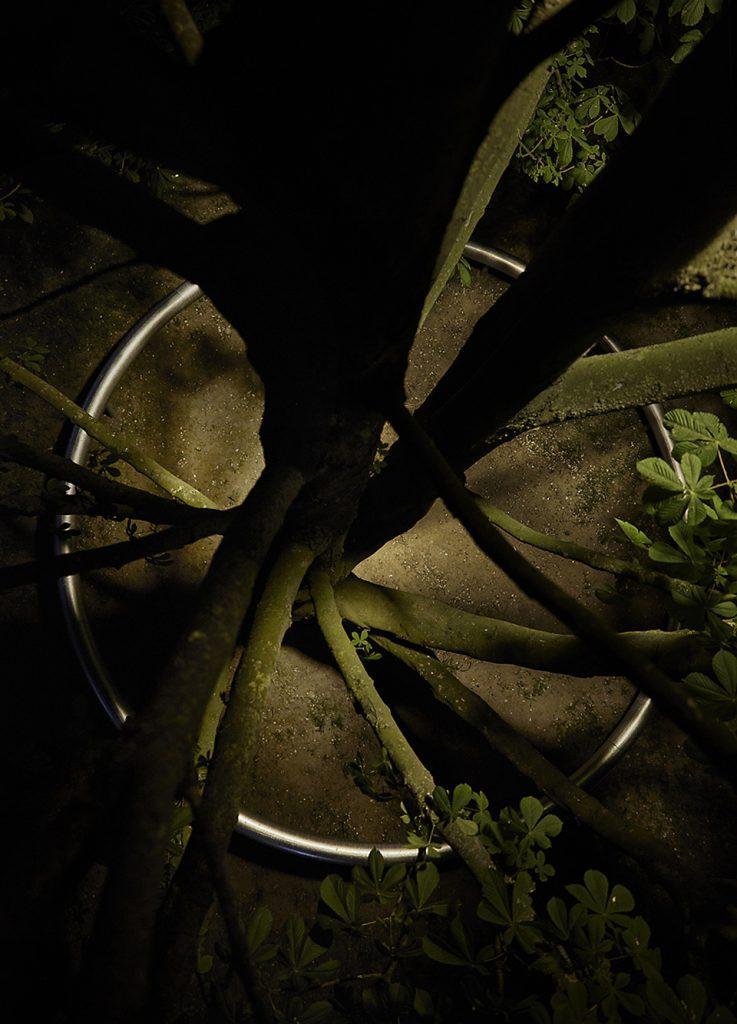 OUI árbol con ramas 006