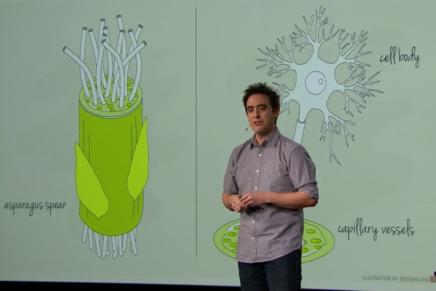 Andrew Pelling muestra el lado creativo del ámbito científico