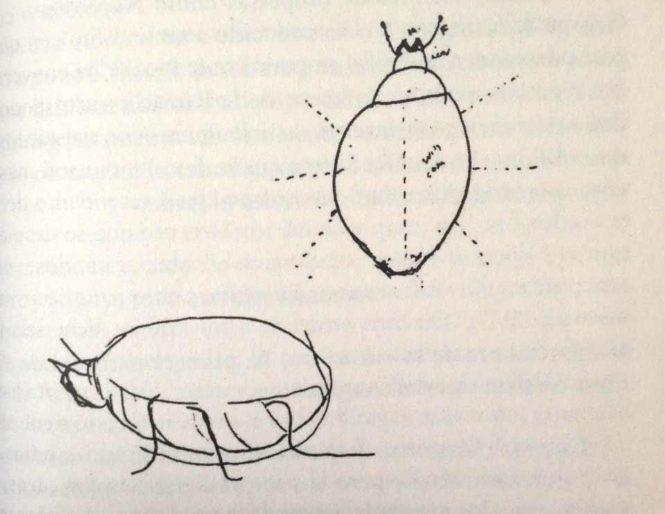 Insectos de Vladimir Nabokov
