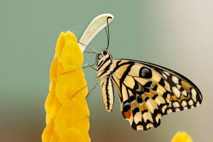 10 consejos que te ayudarán a empezar en la fotografía macro