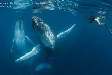 Las fotos ganadoras del 2018 Underwater Photographer of the Year
