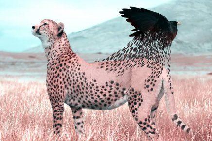 Descubre los animales más mágicos de Julien Tabet