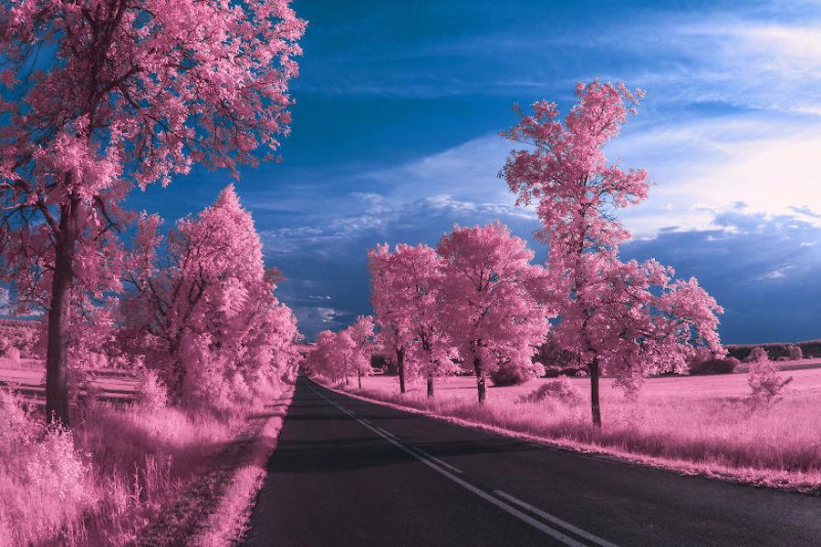 fotografías infrarrojas
