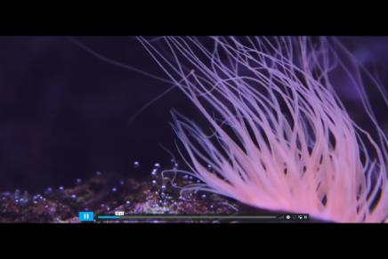 Kingdom Ocean, el film experimental que te sumergirá en las profundidades del océano
