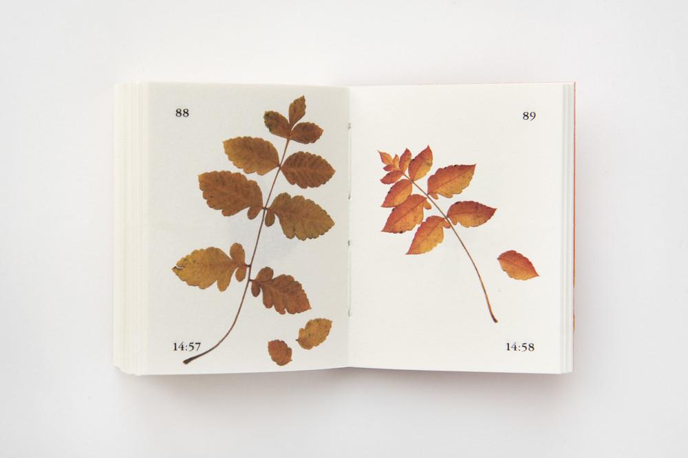 Rues et feuilles de la Krutenau, 2017, coréalisation avec Christina Schmid. Photographie : ©Christina Schmid