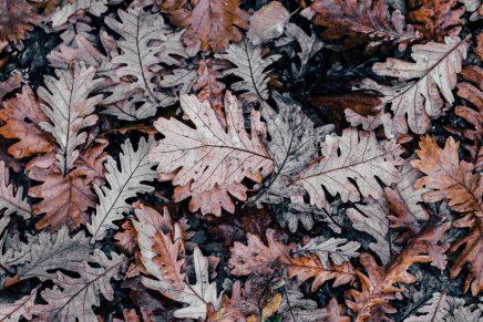 El último fin de semana del otoño ya está aquí y estas son nuestras propuestas