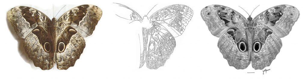 Entomología caligosp