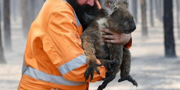 La ilustración como herramienta para ayudar a Australia tras los incendios