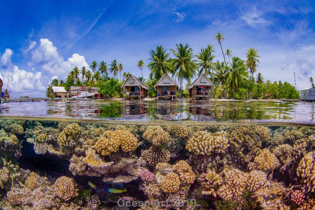 Estas imágenes son las ganadoras del concurso de fotografía submarina de 'Ocean Art'. Arrecifes.