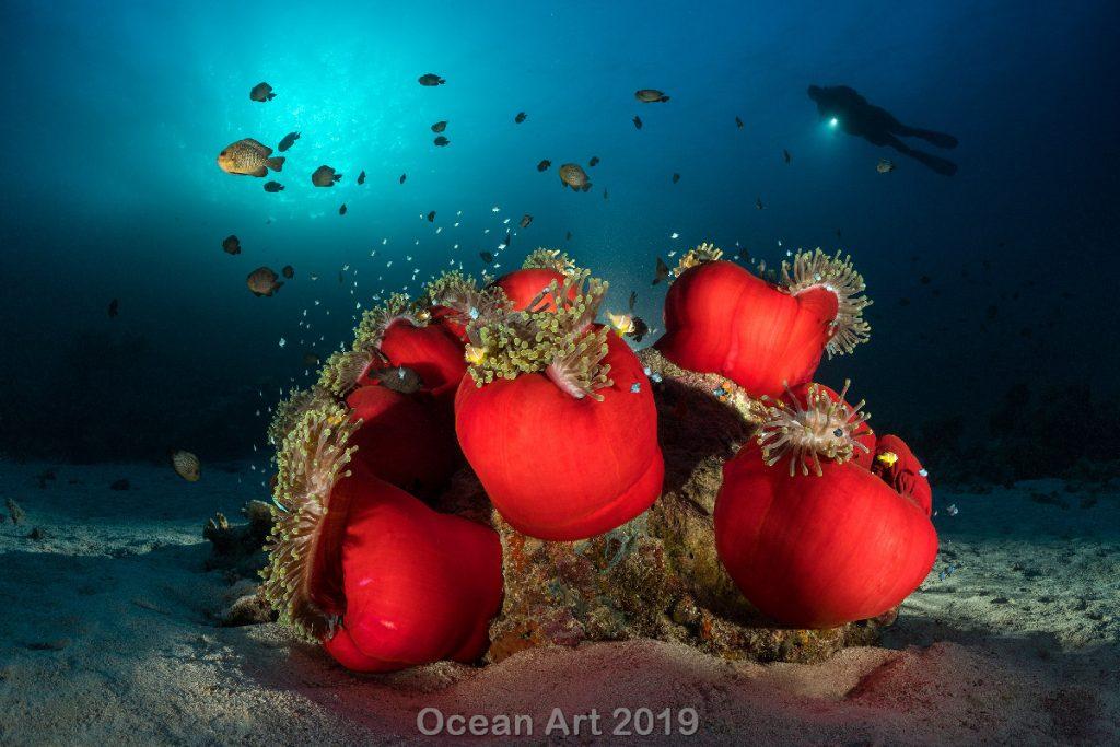 Estas imágenes son las ganadoras del concurso de fotografía submarina de 'Ocean Art'. Bajo del mar.